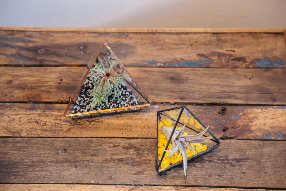 terariu cu planta aeriana, in forma de piramida, nisip colorat