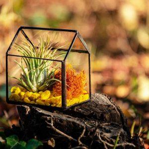 terariu cu planta aeriana in forma de casuta geometrica
