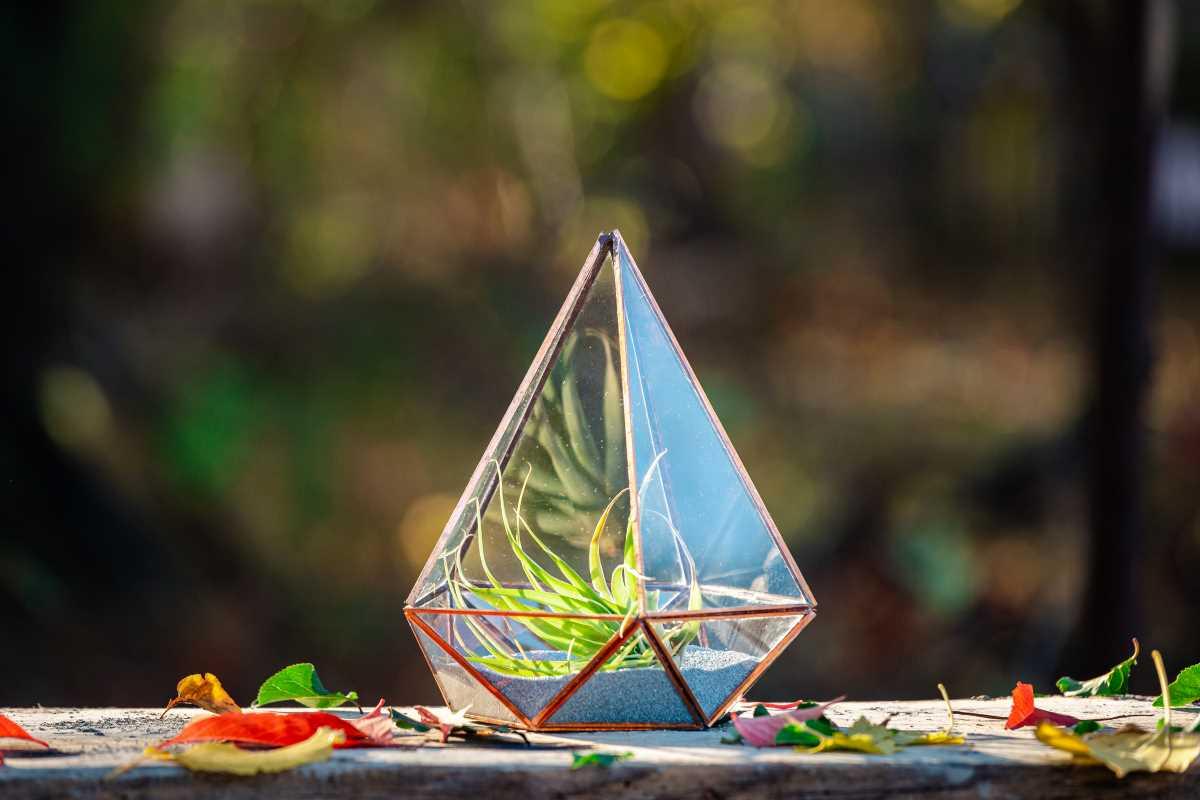 terariu cu planta aeriana, nisip gri, handmade