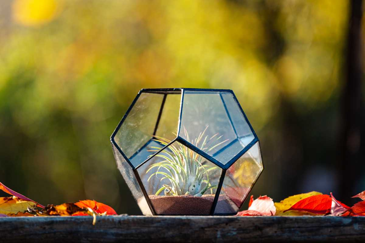 Terariu cu planta aeriana in sticla cu nisip crem, handmade