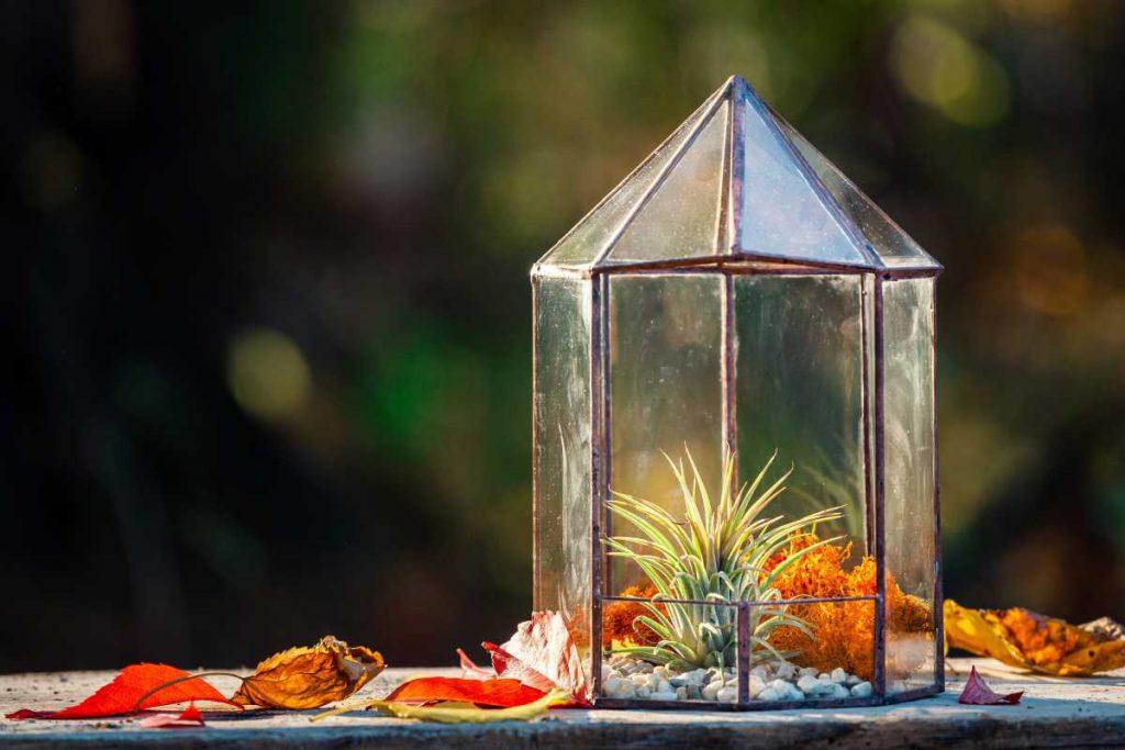 terariu cu planta aeriana, filigorie din sticla, muschi portocaliu
