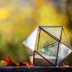 terariu cu planta aeriana, lucrat handmade, nisip crem, icosaedru