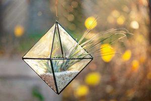 terariu cu planta aeriana in forma geometrica, pietre albe