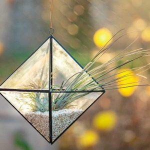 terariu cu planta aeriana, octaedru in natura