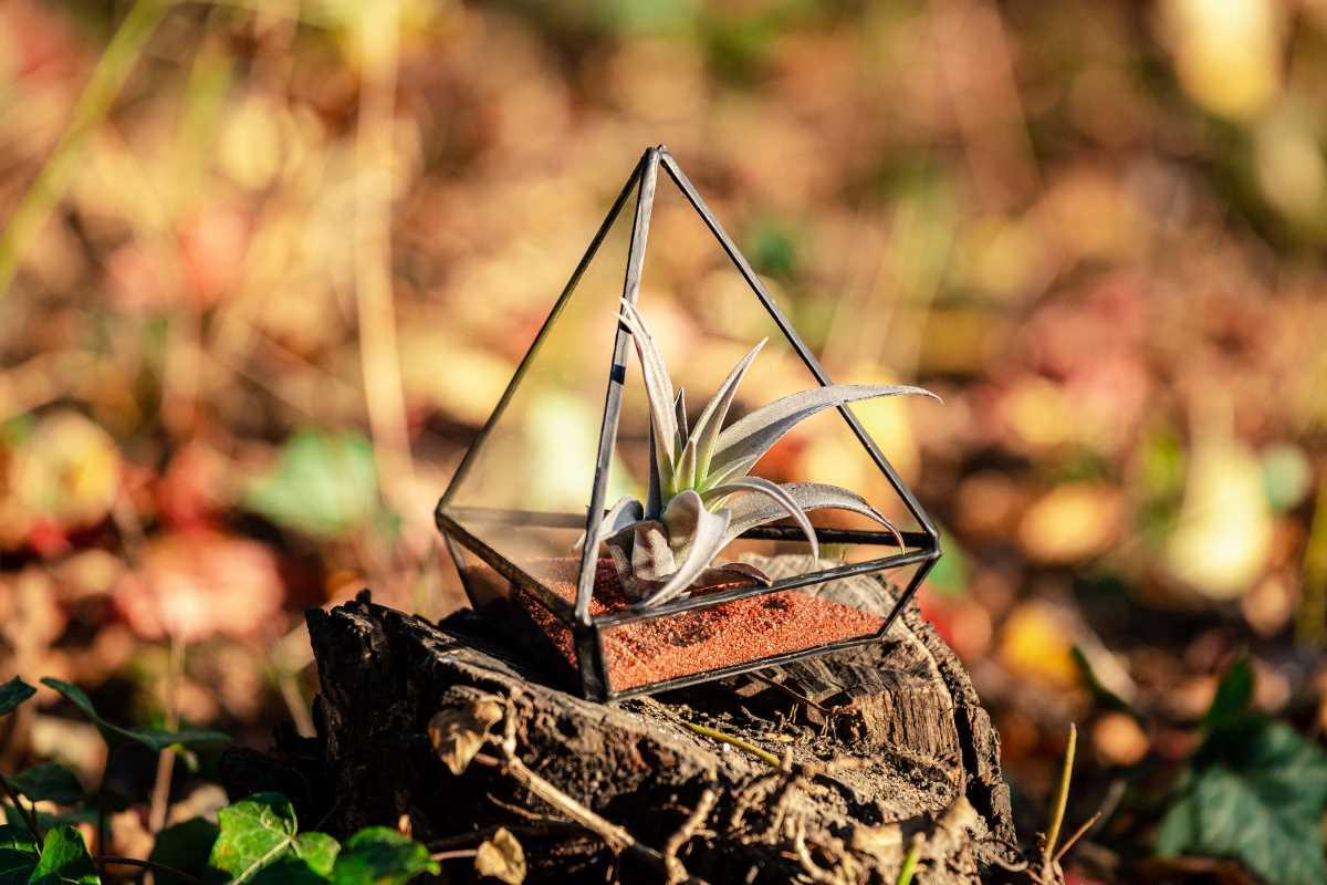 terariu cu planta aeriana, piramida handmade din sticla