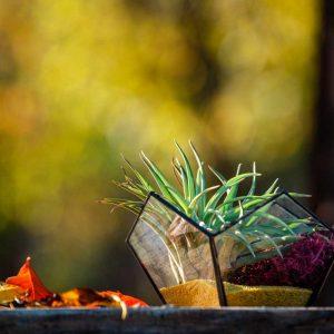terariu cu planta aeriana, nisip galben