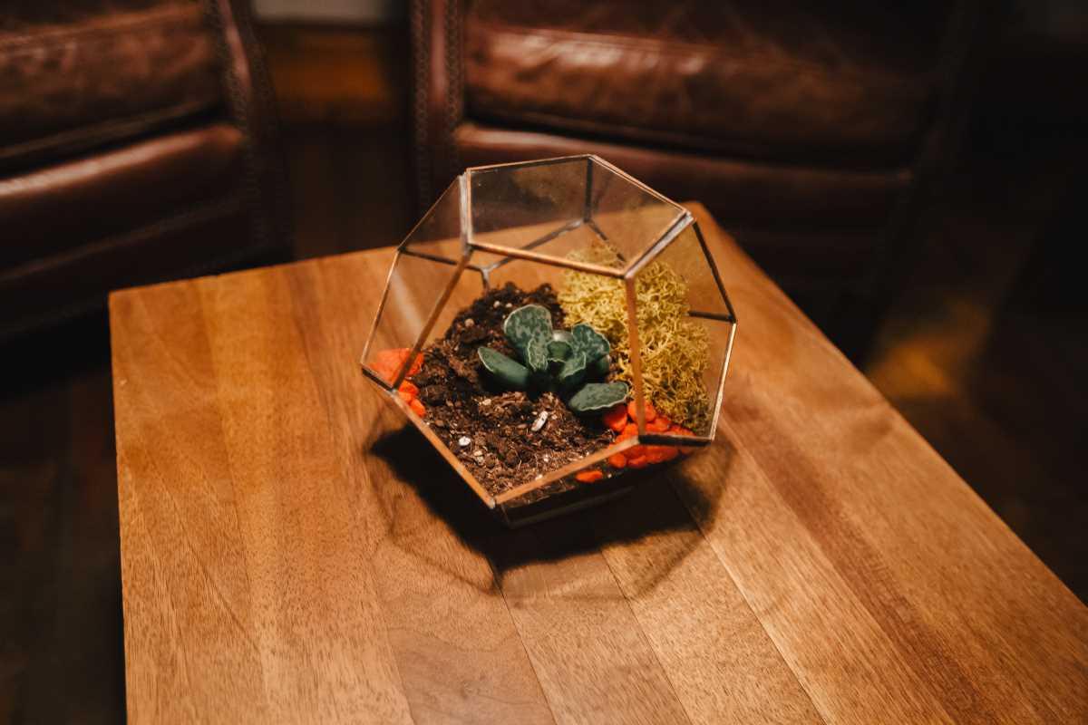 Terariu cu planta suculenta lucrat manual, geoemtric, dodecaedru