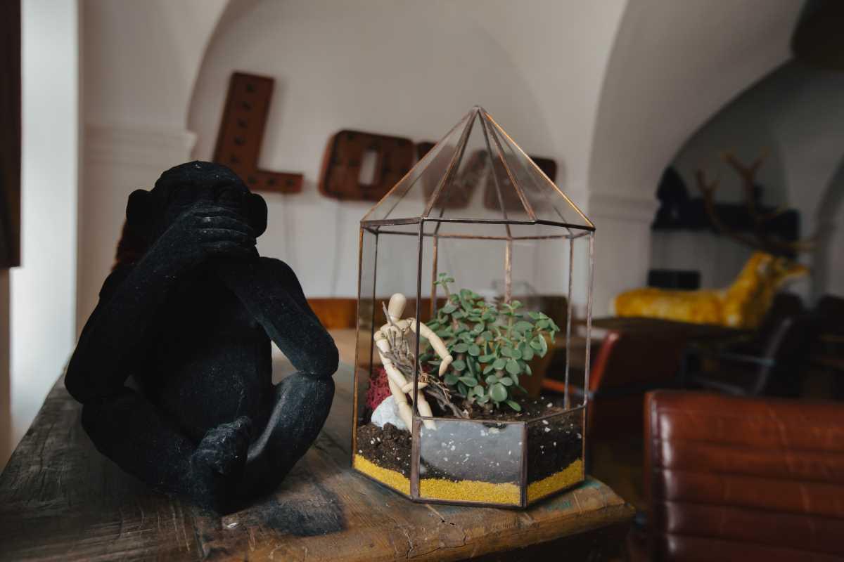 terariu cu planta aeriana, filigoria vintage, nisip galben