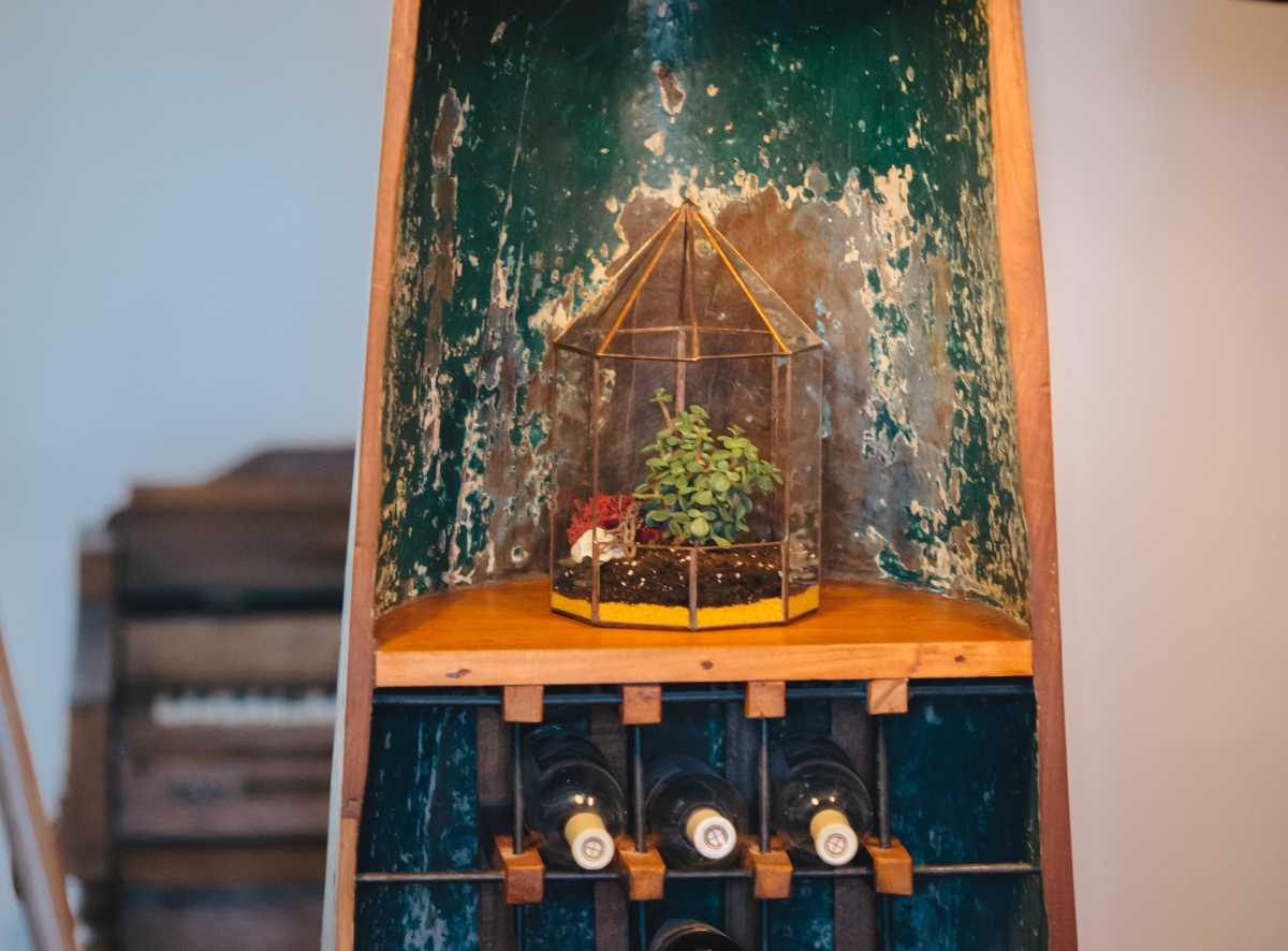 terariu cu planta aeriana, filigorie din sticla reciclata