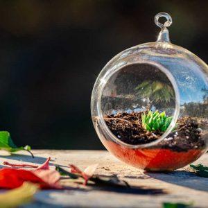 Terariu cu planta suculenta sempervivum in glob de sticla lucrat manual