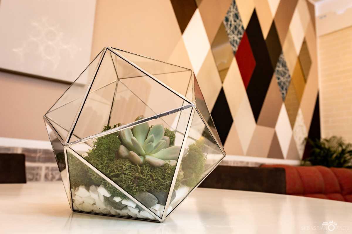 terariu cu planta suculenta sempervivum, muchii gri, pietre de rau, icosaedru