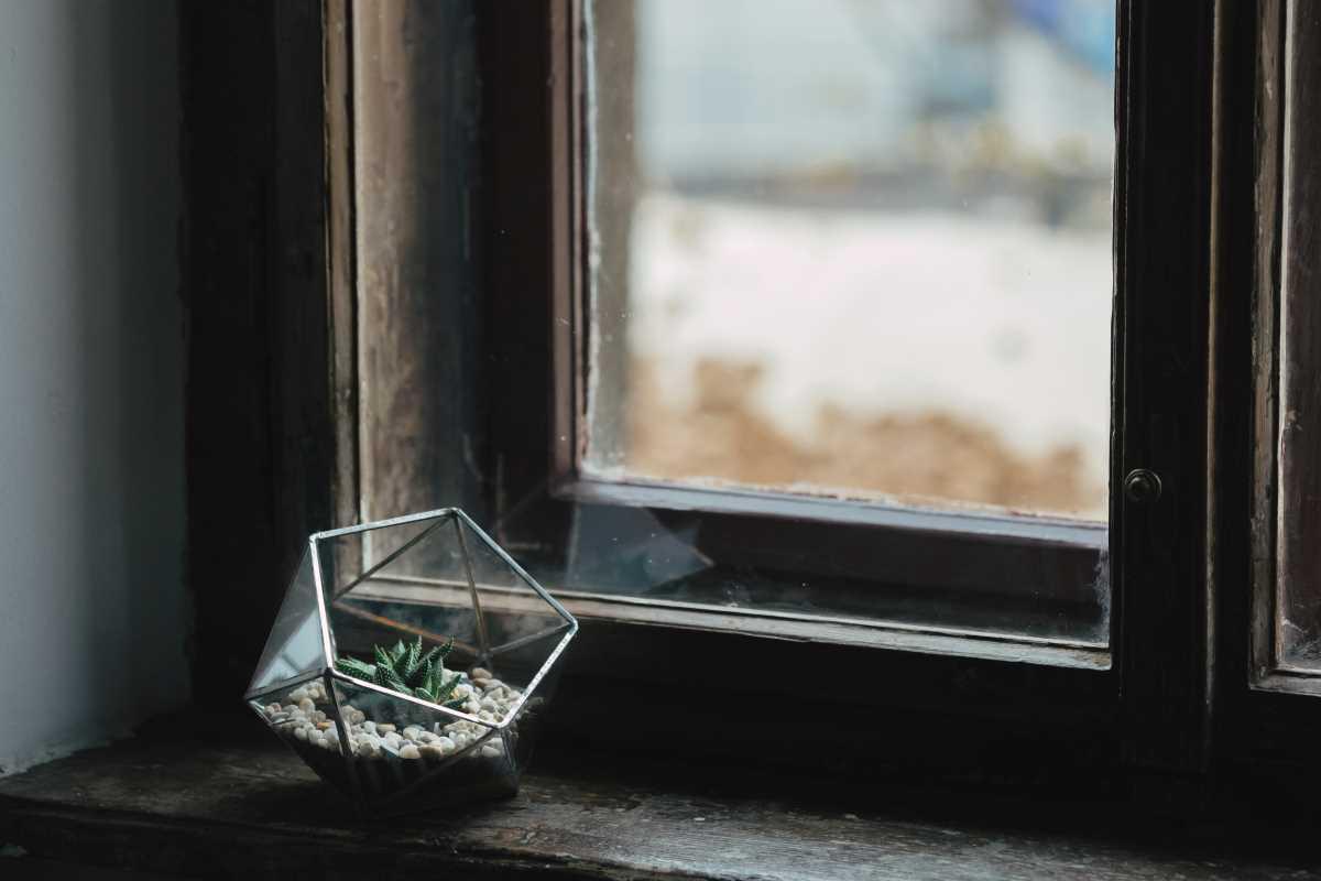 terariu cu planta suculenta, semi-icosaedru cu pietre de culoare naturala