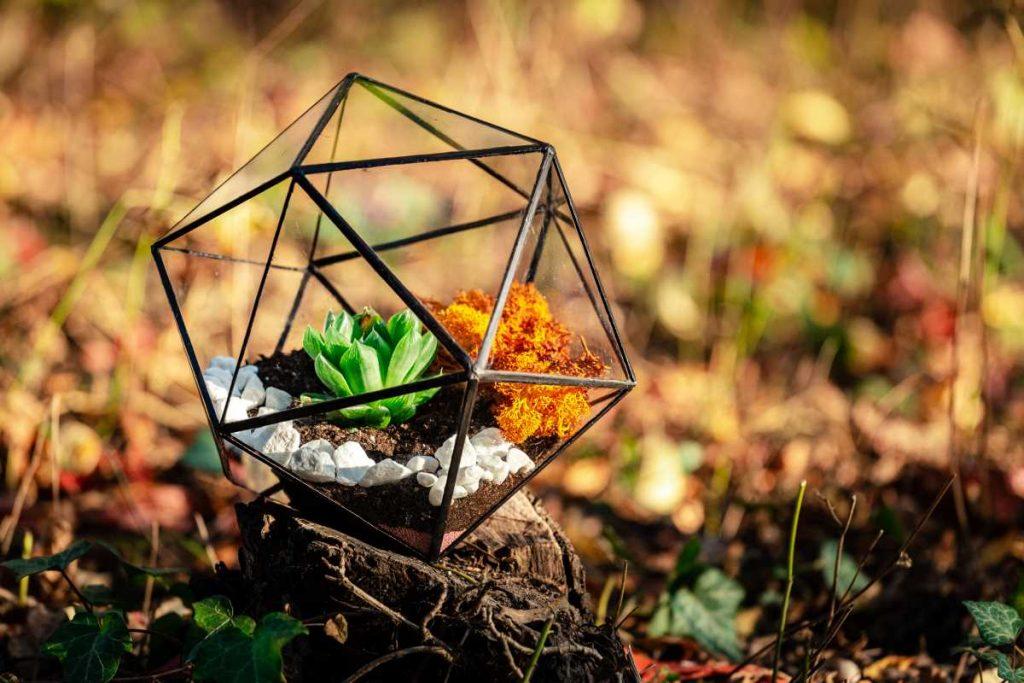 terariu cu planta suculenta, pietre albe, icosaedru