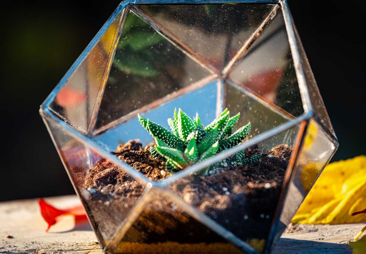terariu cu planta suculenta, semi-icosaedru cu nisip galben
