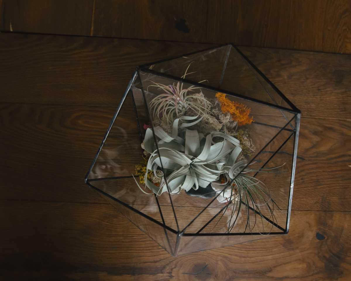 terariu cu plante aeriene, decoratiune de interion, din sticla, icosaedru