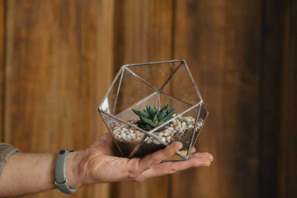 terariu cu planta suculenta, din sticla, semi-icosaedru lucrat manual