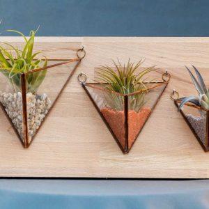 terariu cu planta aeriana, nisip si pietre colorate