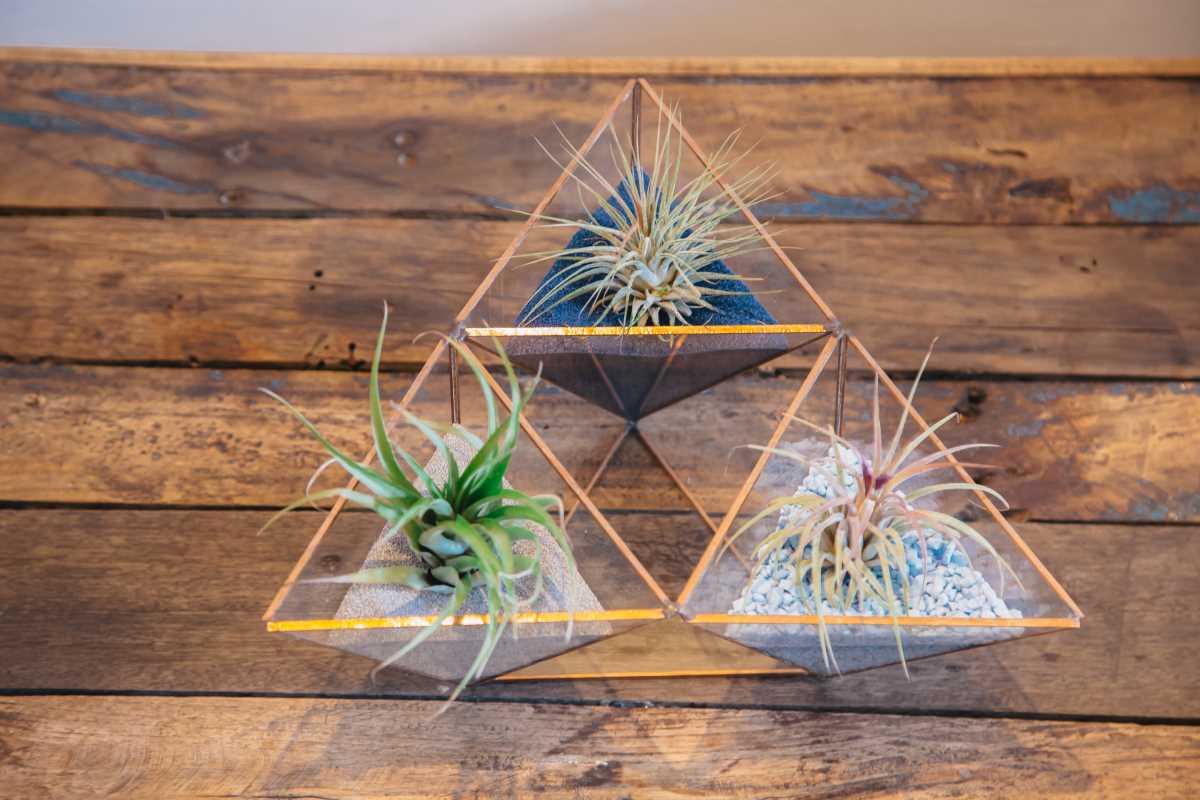 Terariu cu plante aeriene pe masa, tilandsia, tri-piramida