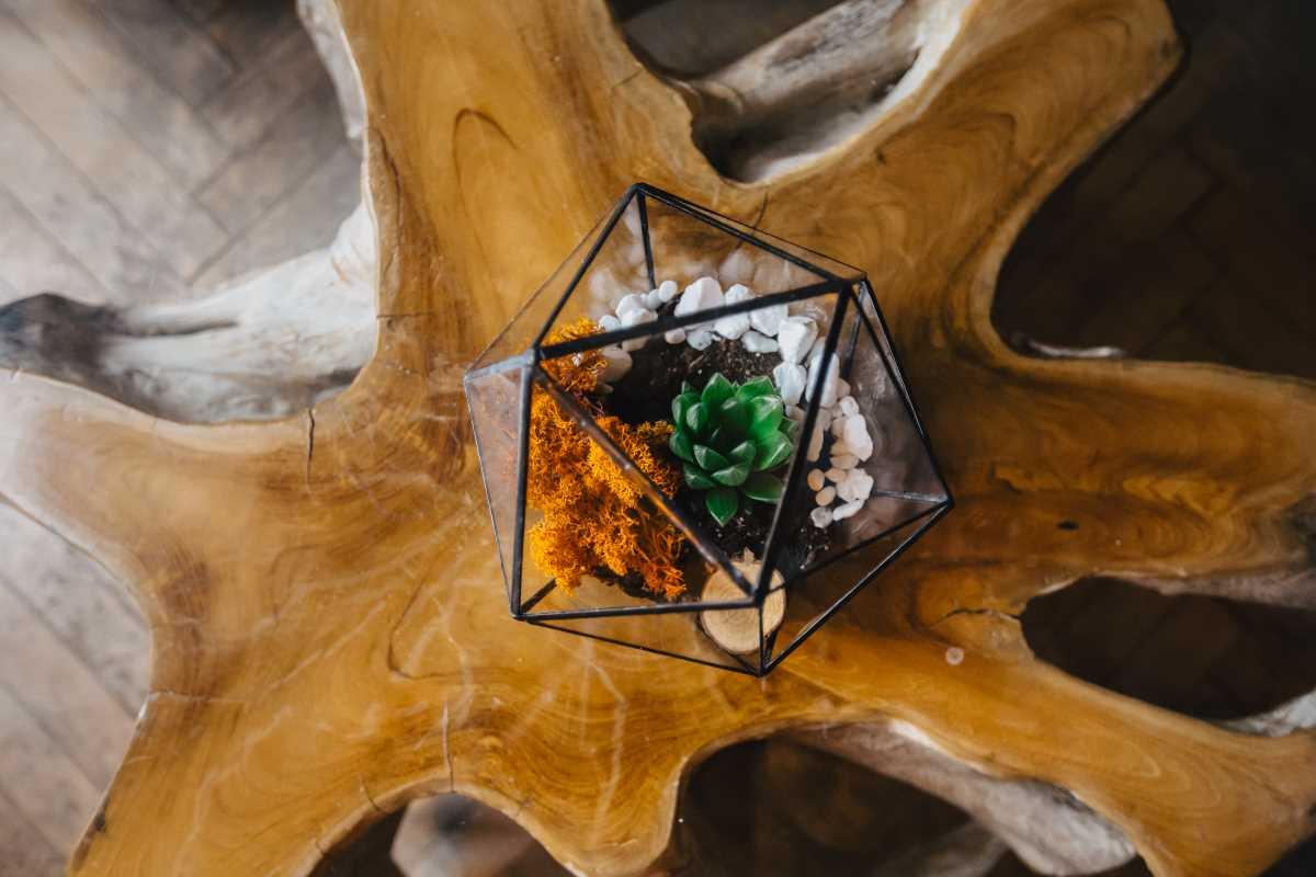 terariu cu planta suculenta, pietre natur si lichen, icosaedru