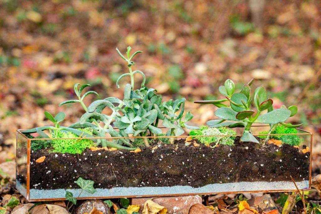 Terariu cu plante suculente, echeveria, nisip gri, geometric