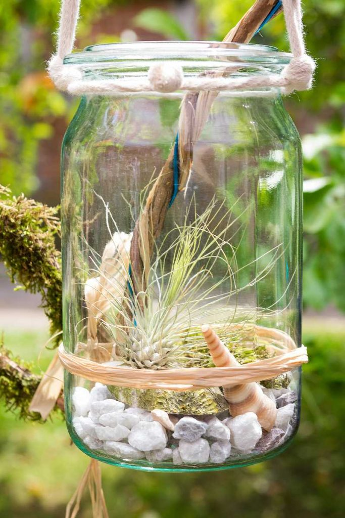 Terariu cu planta aeriana, bol de sticla, lemn, pietricele natur, scoici, funie, decor verde