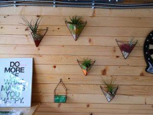 Terariu cu planta aeriana, piramide, sticla, perete lemn, tillandsia