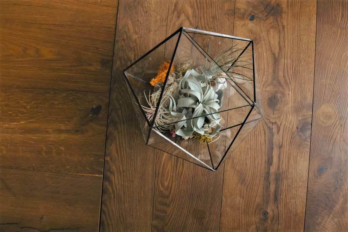Terariu cu plante aeriene, icosaedru de sticla, xerographica, margini negre, fundal lemn natur