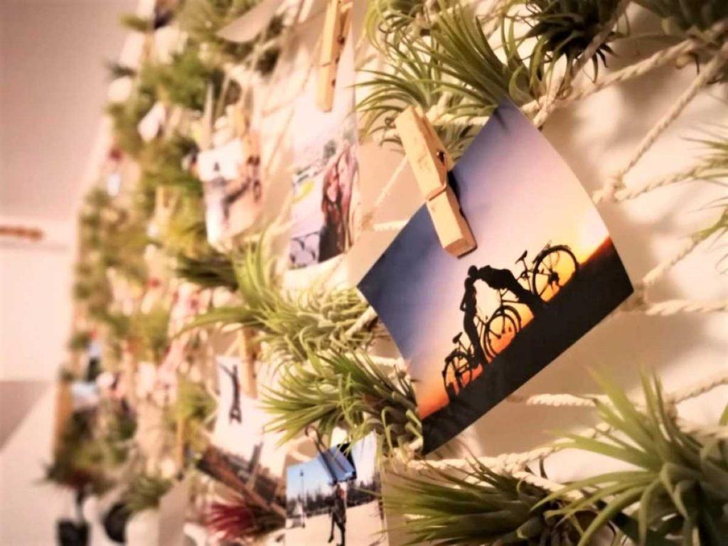Cuplu pe bicicleta, fundal plante aeriene, hamac, gradina verticala, tillandsia