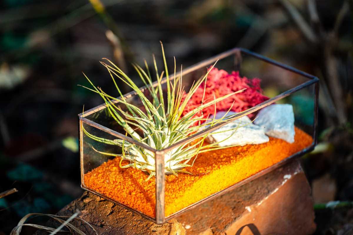 Terariu cu planta aeriana, sticla, jardiniera, tillandsia, verde, nisip portocaliu