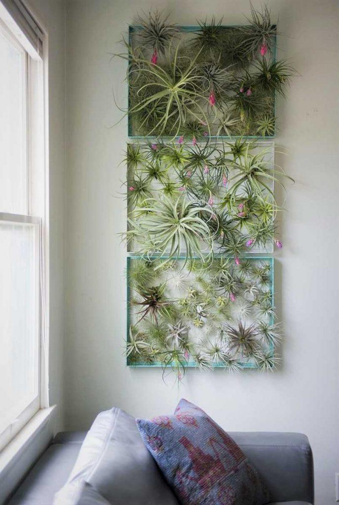 Gradina verticala cu plante aeriene, tablou plante tillandsia, canapea, living, tillandsia, sufragerie, fundal alb