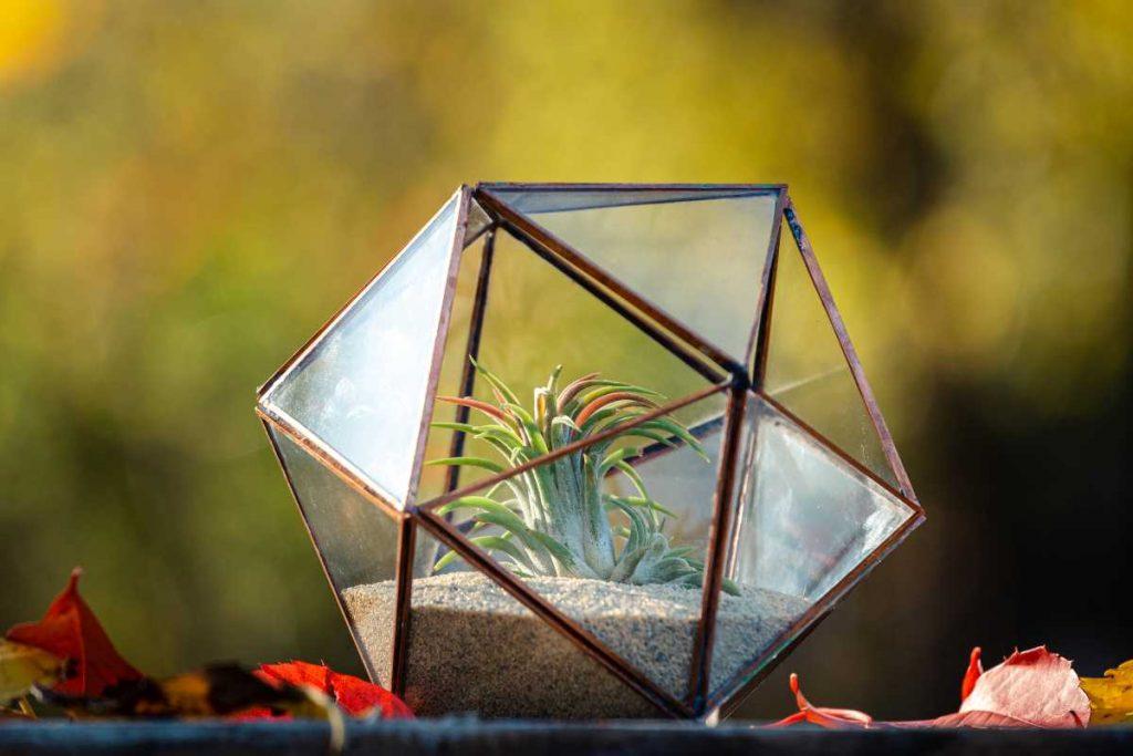 Terariu cu plante aeriene, icosaedru, sticla, lucrat manual, tillandsia, nisip natur, fundal galben