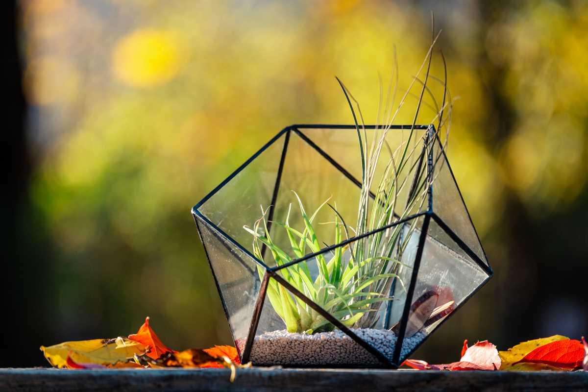 Terariu cu plante aeriene, sticla, semi-icosaedru, lucrat manual, tillandsia, vitraliu, fundal galben