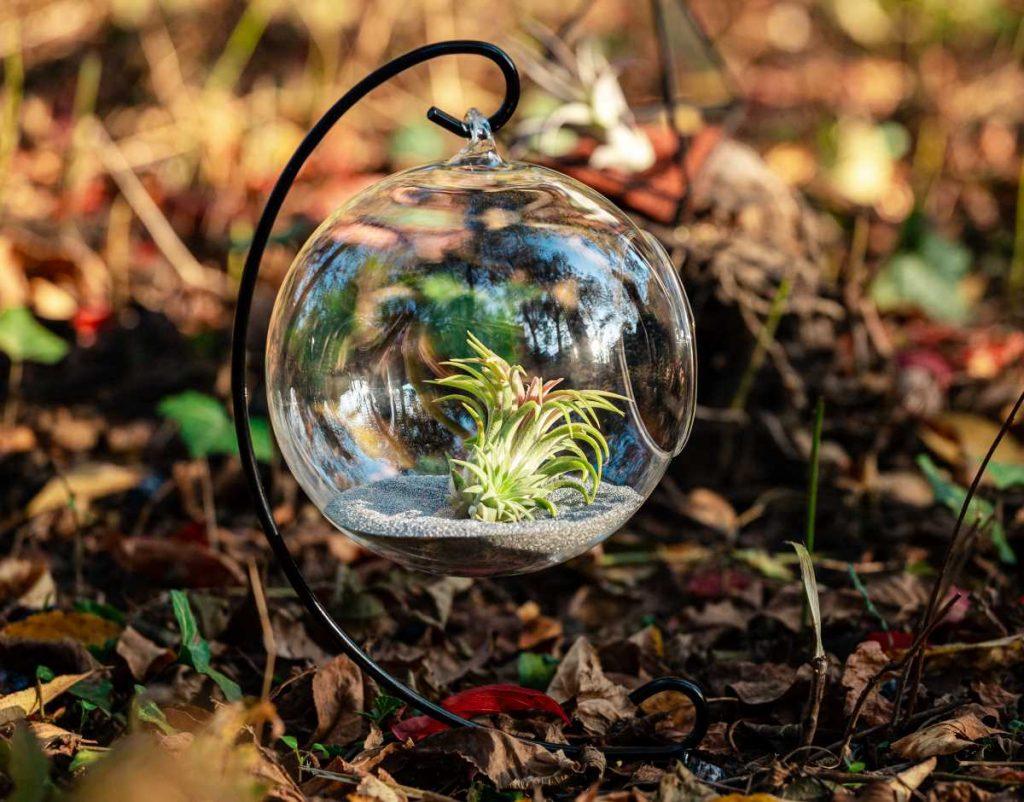 Terariu cu plante aeriene, glob de sticla, fundal maro natur, suport metalic negru