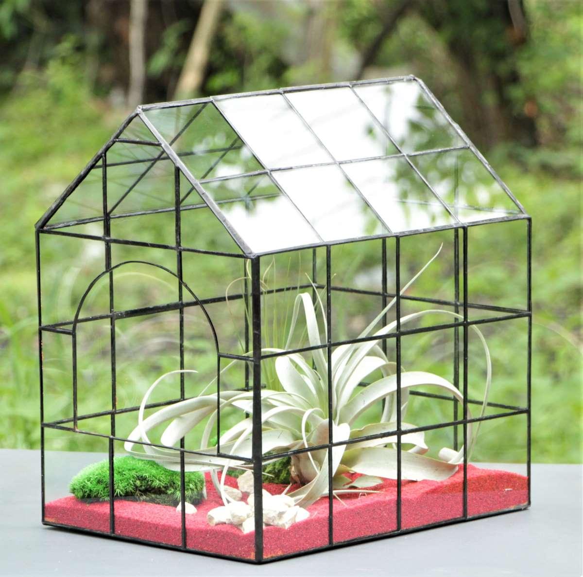 Terariu cu plante aeriene, nisip rosu, aranjament pentru casa sau birou