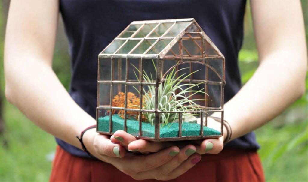 Terariu mozaic cu plante aeriene, nisip turoaz, natura