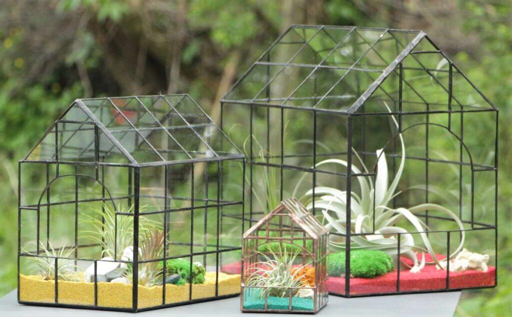 Terarii cu plante aeriene, trei dimensiuni, natura