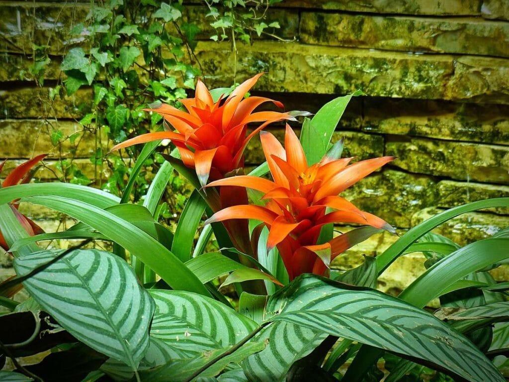 bromelia portocaliu, plante verzi, planta suculenta, fundal caramida, iedera fundal