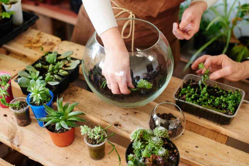 plantarea unui terariu, bol de sticla, maini, plante suculente, masa de lemn