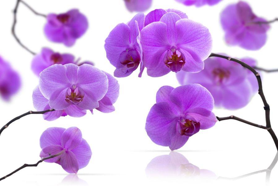 detaliu de flori de orhide,e de culoarea mov