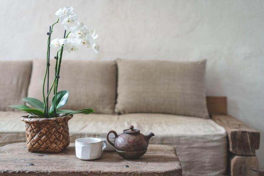 orhidee cu flori albe, ghiveci maro, ceainic si ceasca de ceai, decor rustic