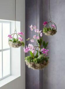 plante pune in ghivece agatare, flori roz, fundal gri