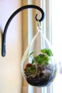 terariu cu plante, forma de para din sticla, agatatoare neagra
