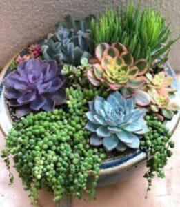 ghiveci cu plante suculente, soiuri diferite, colorate