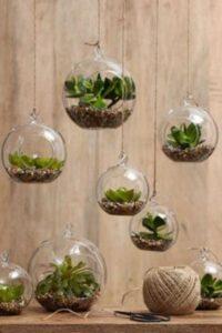 globuri din sticla cu plante suculente, fundal maro deschis