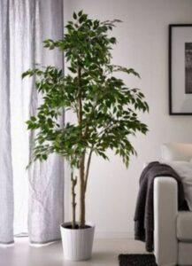 copac de interior, ghiveci alb, mobila alba