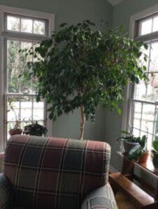 planta inalta verde, fotoliu vintage