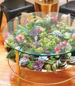 masa de living din sticla cu plante suculente si plante colorate, decor cu plante