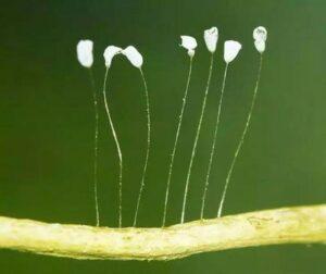 detaliu cu plante abia crescute, varfuri albe, fundal verde