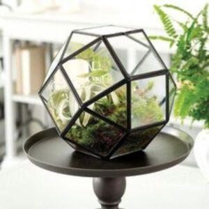terariu geometric cu plante in interior, masa de lemn de culoare inchisa