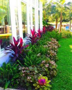 gradina cu plante exotice, palmieri inalti